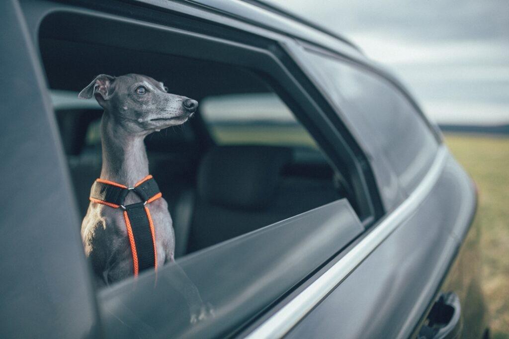 Pronájem auta na výlety se psem